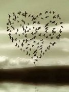 117_birds.heart.jpeg